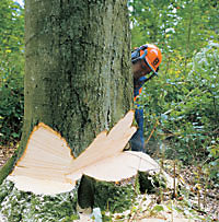 man felling a tree using a chainsaw