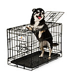 Petmate 2-Door Training Retreat Wire Kennel, 19 in., For Dogs Up To 15 lb.