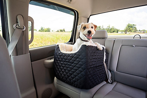 Pet Travel and Safety