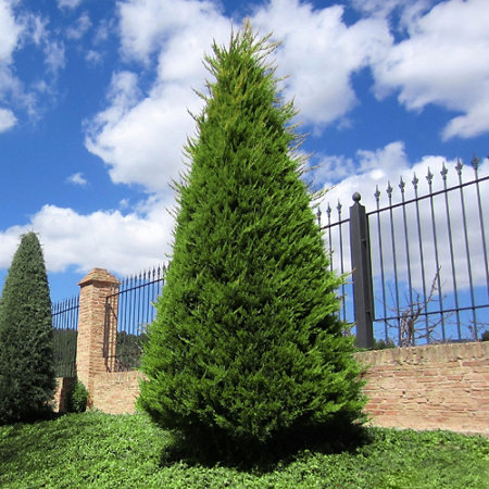 Trees, Shrubs & Plants - Tractor Supply Co.