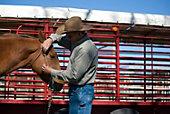 Horse Health & Medical