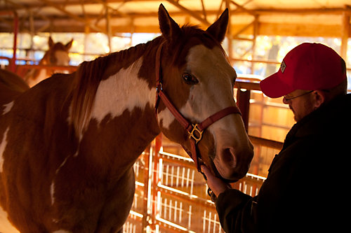 Horse Vaccination and Antibiotics