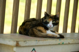 Cat relaxing on bench
