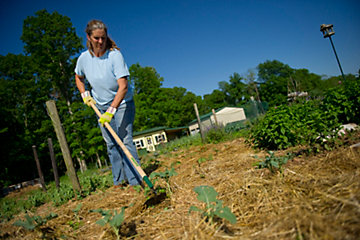 how to grow healthy vegetables