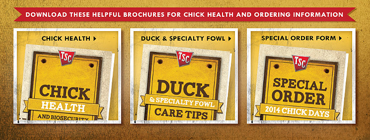 Download these helpful brochures for chick health and ordering information