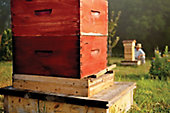 a red bee hive