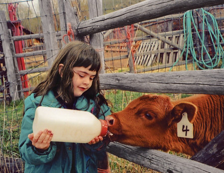 little girl giving a bottle to a calf