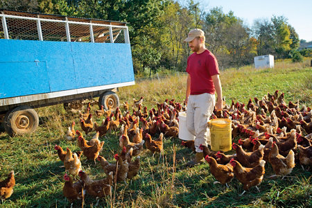 Terrell, surrounded by chickens, carrying two buckets of feed