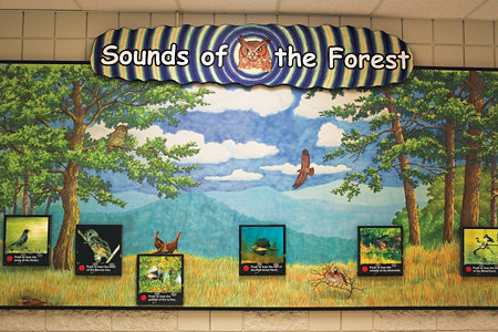 'Sounds of the Forest' board on one wall