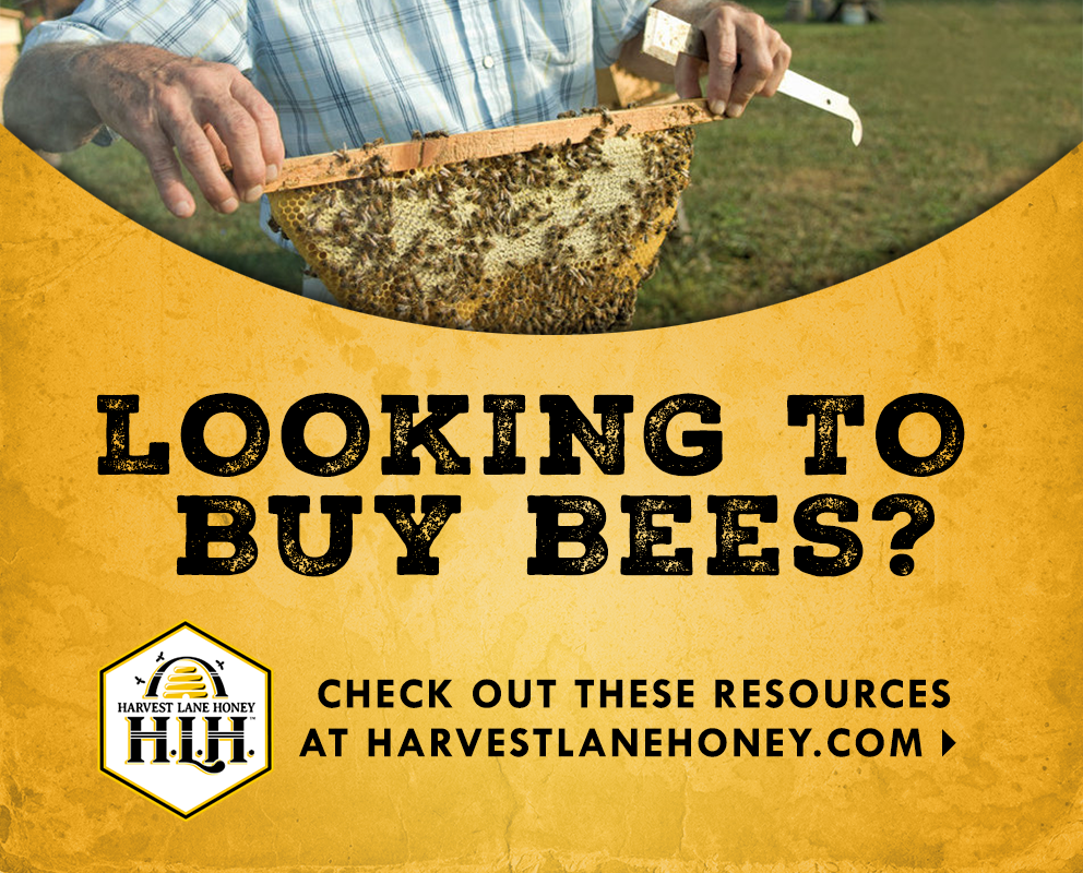 Looking to buy bees? Check out these resources at harvestlanehoney.com