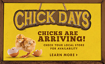 Live Chicks Arriving! Contact your local Tractor Supply Co. Store for details.