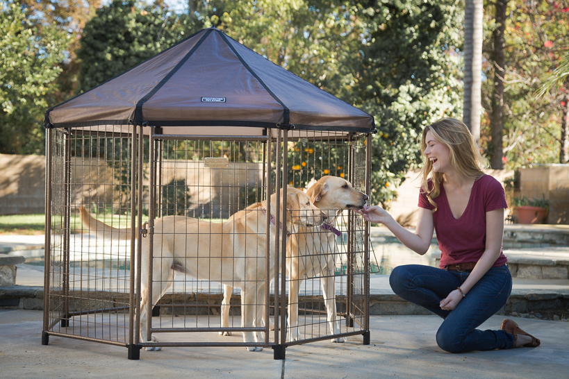 Two dogs enjoying an Advantek pet gazebo.