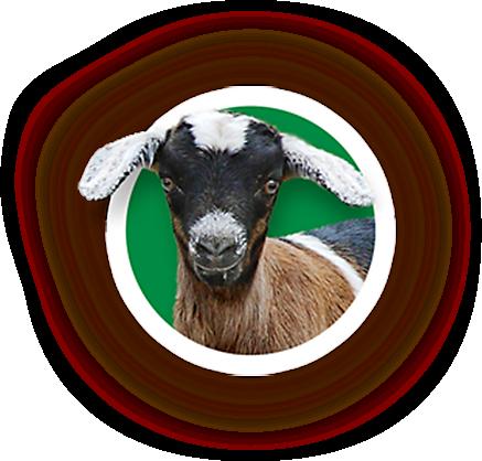 "goats"""