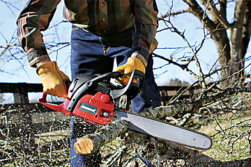 Selective Tree Harvesting - Tractor Supply Co.