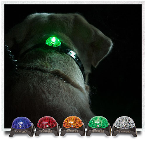 Illuminated beacon sits on the back of hunting dog collar.