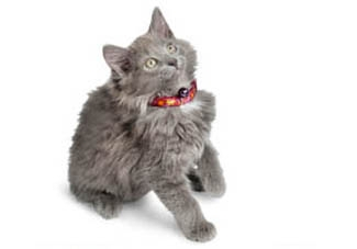 Cat Collars - Your Kitty's Credentials!