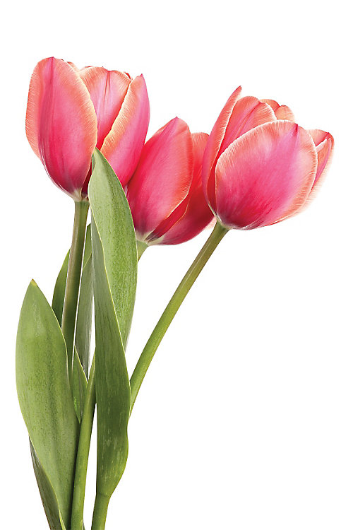 Plant fall bulbs for spring beauty - Tractor Supply Co.