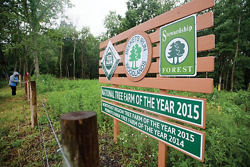 Becketts Tree Farm