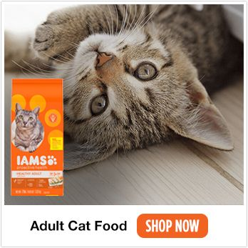 adult cat food