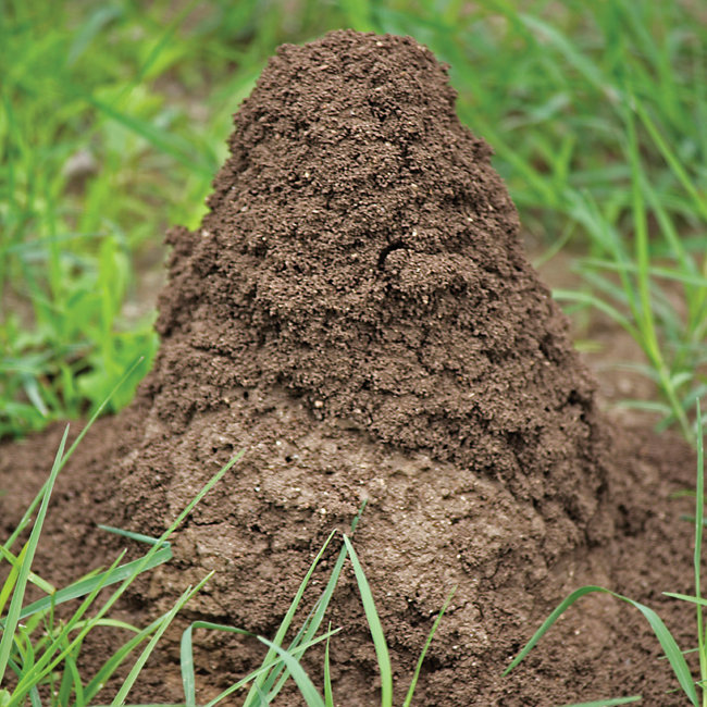 Fire Ant Mound - Tractor Supply Co.