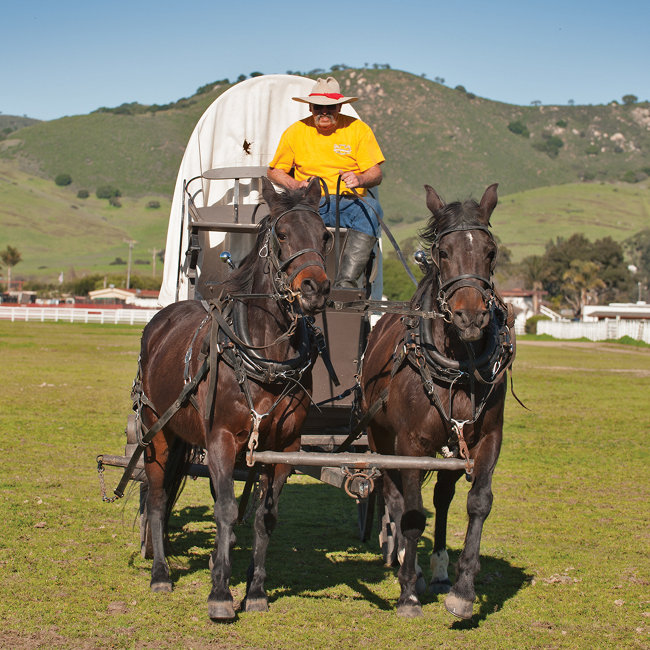 Racing horses find a new career re-enacting history - Tractor Supply Co.