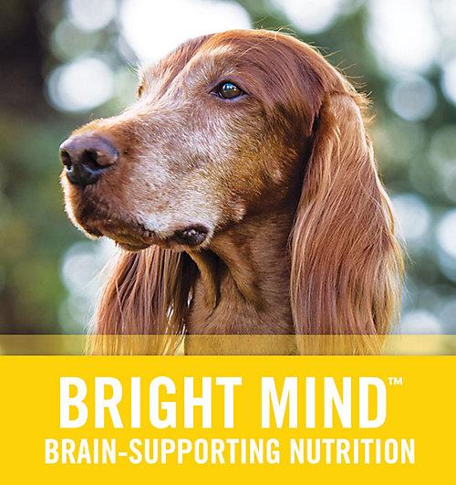 Bright Mind