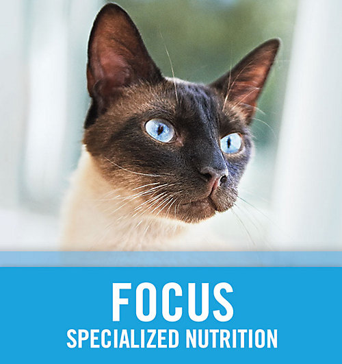 Cat Focus