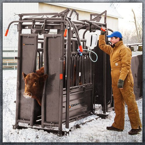 tarter cattle handling