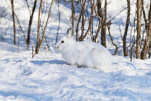 Winter Rabbit Hunting - Tractor Supply Co.