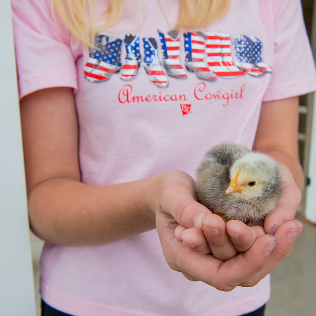 Salmonella Safety for Handling Baby Chicks - Tractor Supply Co.