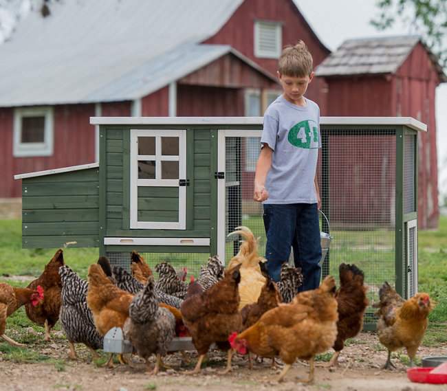 Charmant U201cThere Is, Of Course, A Certain Level Of Responsibility Required To  Properly Care For Any Living Animal. However, When It Comes To Backyard  Poultry, ...