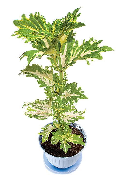 overwinterize plants