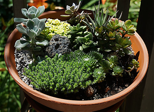 How To Grow An Indoor Succulent Garden