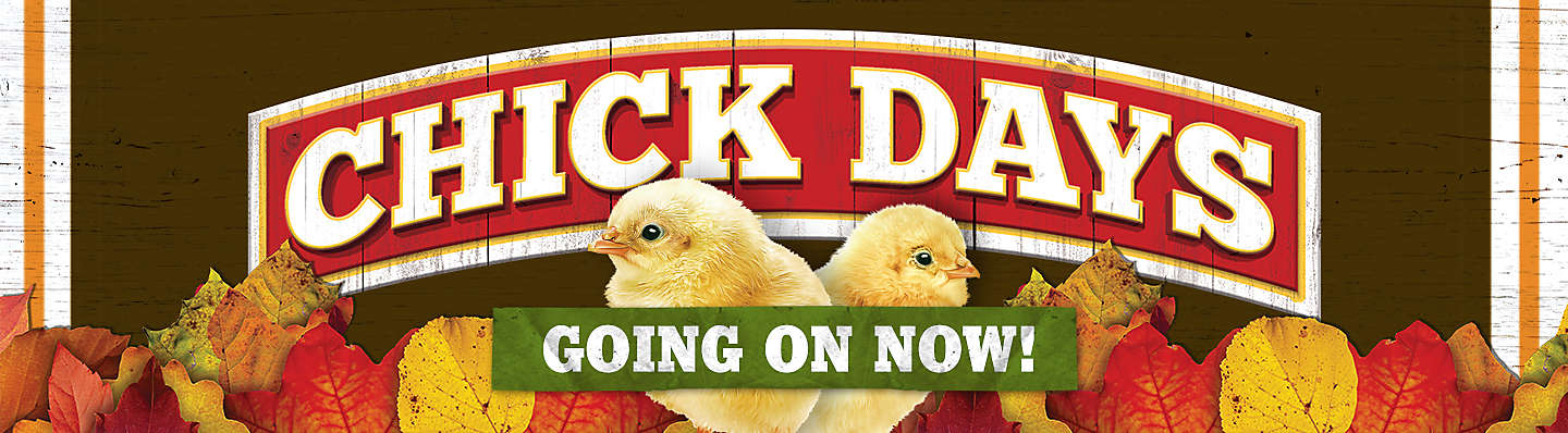 Chick Days - Start Your Flock! Tractor Supply Co.