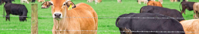 Fencing | Tractor Supply Co