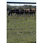 Feedlot Panel, Combo, 16 ft. L x 50 in. H