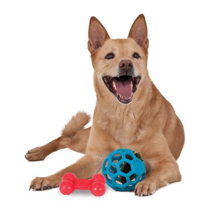 dog laying down with toys between its front paws
