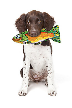 dog with a plush fish toy in its mouth