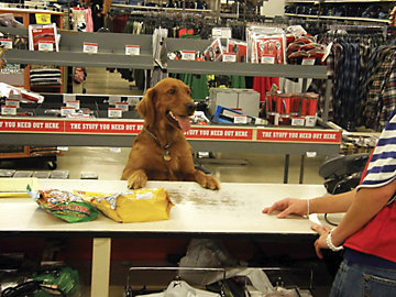 Golden Retriever among Best Customers of Tractor Supply Co ...