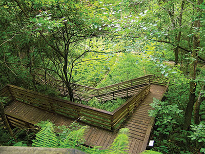 Stairway down Devil's Millhopper - Tractor Supply Co.