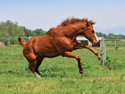 a horse playing in the field