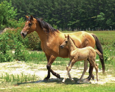 a horse and foal walking