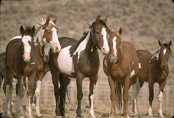 Adopt A Mustang Or Wild Burro Horse Care Tractor