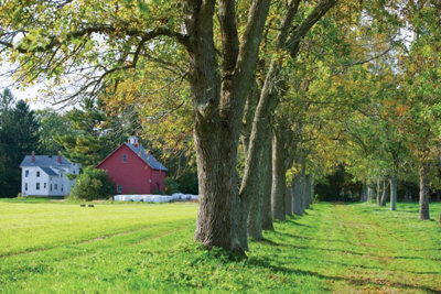 view of the farmhouse with trees lining the drive