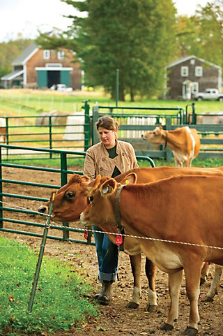 woman leading two dairy cattle