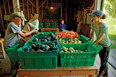 workers choosing produce out of baskets