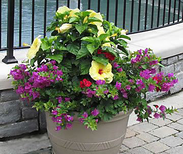 Attract Hummingbirds With This Container Garden Bird