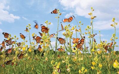 a swarm of butterflies in a field