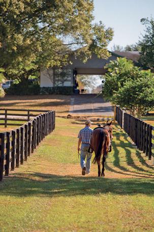man walking a saddled horse between fences towards a barn