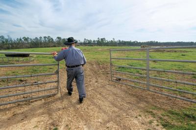 Louis walking through a cattle gate